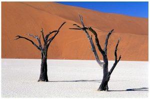 namib-desert-v-982