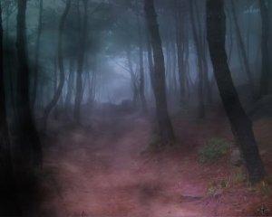 woods_night
